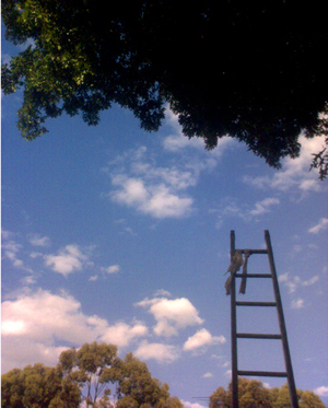 A ladder rasing up into the sky