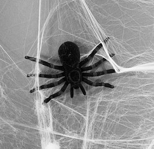 A fake spider in Halloween webbing